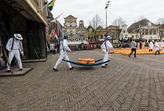 Carriers walking with many cheeses in the famous Dutch cheese market in Alkmaar, Royalty Free Stock Photo