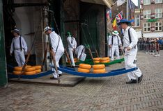 Carriers walking with many cheeses in the famous Dutch cheese market in Alkmaar, Royalty Free Stock Images