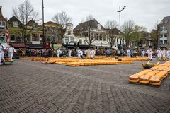 Carriers walking with many cheeses in the famous Dutch cheese market in Alkmaar, Stock Photos