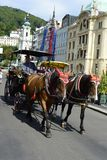 Carrigae with red cap horses in Karlovy Vary stock photo