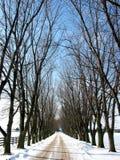 Carril alineado árbol 1 del invierno Imagenes de archivo
