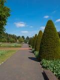Carril alineado con los árboles del buxus Foto de archivo libre de regalías