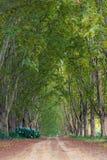 Carril alineado por los árboles planos Imagen de archivo