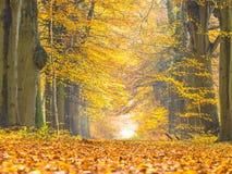 Carril con el follaje amarillo de los árboles de abedul durante otoño Foto de archivo libre de regalías