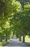 Carril con los árboles viejos grandes del callejón Fotos de archivo libres de regalías