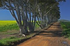 Carril de árboles Foto de archivo libre de regalías