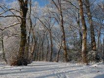 Carril de Forrest en diciembre imagen de archivo libre de regalías