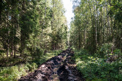 Carril de fuego en el bosque Foto de archivo