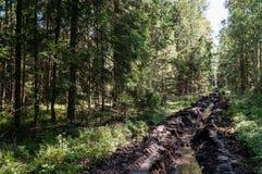 Carril de fuego en el bosque Imágenes de archivo libres de regalías