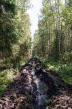 Carril de fuego en el bosque Imagen de archivo