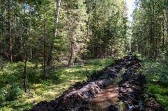 Carril de fuego en el bosque Fotografía de archivo