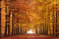 Carril de la arena con los árboles en otoño Fotos de archivo