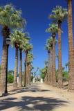 Carril de la palmera Foto de archivo libre de regalías