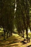 Carril del árbol Fotos de archivo libres de regalías
