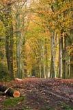 Carril del bosque Fotografía de archivo libre de regalías