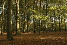 Carril del bosque Fotos de archivo libres de regalías