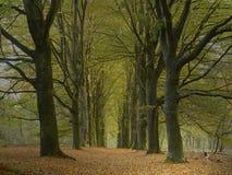 Carril del bosque Foto de archivo libre de regalías