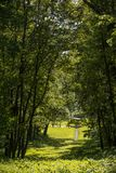 Carril del bosque en última primavera en luz del sol Foto de archivo