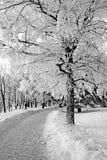 Carril del invierno imagen de archivo libre de regalías