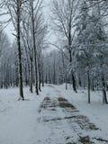 Carril del invierno Fotos de archivo libres de regalías