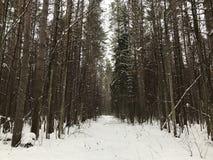 Carril del invierno en el bosque fotografía de archivo libre de regalías
