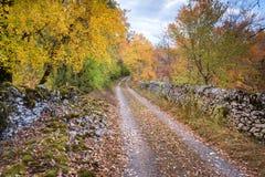 Carril del otoño Foto de archivo libre de regalías