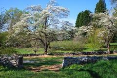 Carril del país de la floración de los árboles de cornejo foto de archivo