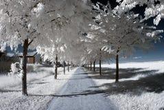 Carril del parque de la cereza. Infrarrojo Fotos de archivo libres de regalías