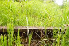Carril en la hierba Imagenes de archivo