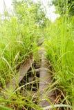 Carril en la hierba Foto de archivo libre de regalías