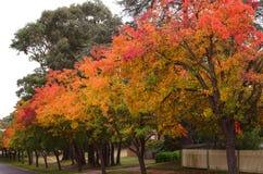 Carril en otoño imagen de archivo