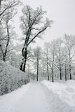 Carril en parque del invierno Fotografía de archivo