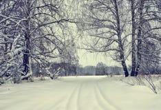 Carril Nevado en un bosque del abedul del invierno Fotografía de archivo libre de regalías