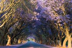 Carril púrpura Fotografía de archivo