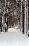 Carril Snow-clad en madera del invierno Foto de archivo
