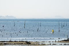 A group of shellfish gather clams. CARRIL, SPAIN - DECEMBER 12, 2015: A group of shellfish gather clams in one of the most important seafood areas in the region royalty free stock photos