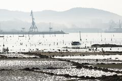 A group of shellfish gather clams. CARRIL, SPAIN - DECEMBER 12, 2015: A group of shellfish gather clams in one of the most important seafood areas in the region royalty free stock image