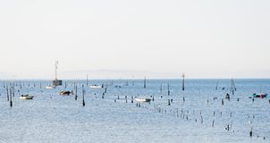 A group of shellfish gather clams. CARRIL, SPAIN - DECEMBER 12, 2015: A group of shellfish gather clams in one of the most important seafood areas in the region stock photography