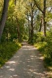 Carril a través del bosque Imagen de archivo libre de regalías