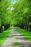 Carril verde del árbol Imágenes de archivo libres de regalías