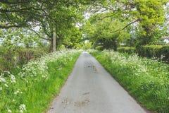 Carril verde enorme del país Fotos de archivo