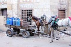 carring气体的马在埃及 库存照片