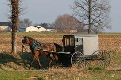 Carrinho Amish tirado por um cavalo marrom bonito, o Condado de Lancaster do cavalo, PA foto de stock royalty free