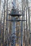 Carrinho da árvore Imagem de Stock