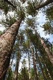 Carrinho da árvore Fotografia de Stock