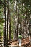Carrinho da árvore dos exames da mulher Foto de Stock Royalty Free