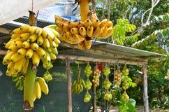 Carrinho de fruta tropical Imagem de Stock