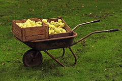 Carrinho de mão completamente de frutos do jardim imagem de stock royalty free