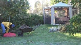 Carrinho de mão da carga do homem com as folhas caídas durante a limpeza do outono no jardim 4K vídeos de arquivo