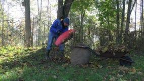 Carrinho de mão da carga do homem com as folhas caídas durante a limpeza do outono no jardim 4K filme